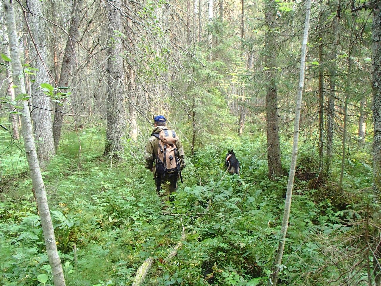 фото группауха в лесу