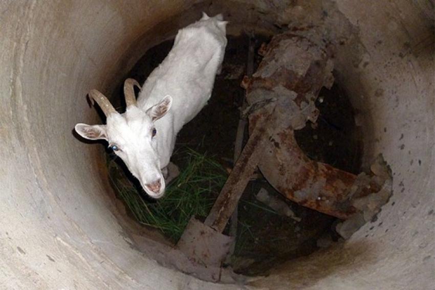 Лошадь повредила ногу, коза упала в колодец. Помощь спасателей потребовалась попавшим в беду животным