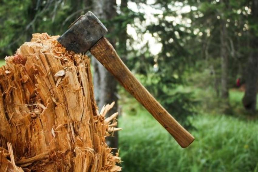 В Вилегодском районе по материалам прокурорской проверки возбуждено уголовное дело о незаконной рубке лесных насаждений