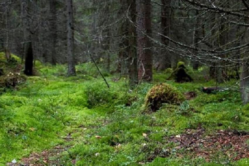 Ушла на пару часов - проплутала весь день. Поход в лес за ягодами обернулся для пенсионерки экстримом
