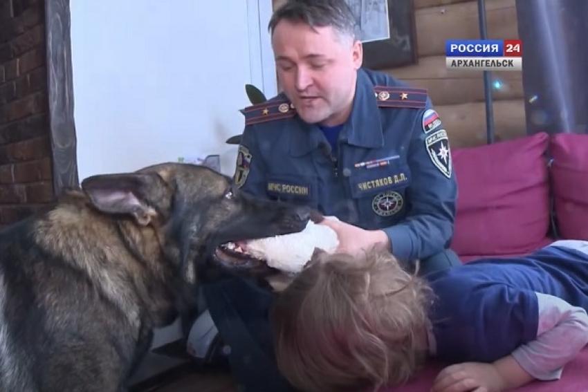 Собака и маленький ребенок в семье