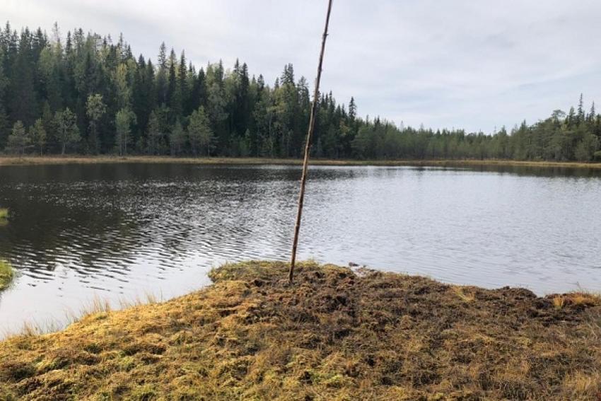 Чудеса возможны! Нашлись двое потерявшихся в лесах Архангельской области