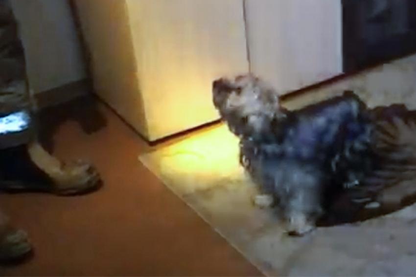 «Кухонный» пожар в Северодвинске: спасен мужчина и его собака