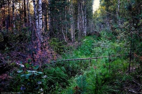 В лесах Архангельской области активизировались гадюки