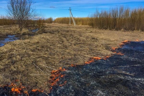 С начала апреля в Архангельской области произошло более 130 травяных пожаров