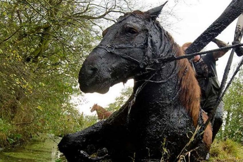 Катунинские пожарные вызволили лошадь из болота