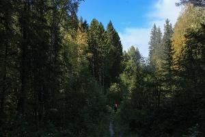Поиск пропавших в лесу. Одну женщину нашли живой, еще две до сих пор не обнаружены