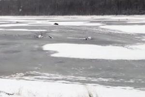 В Каргопольском районе ищут утонувшего мужчину